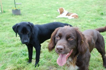 2 of the dogs